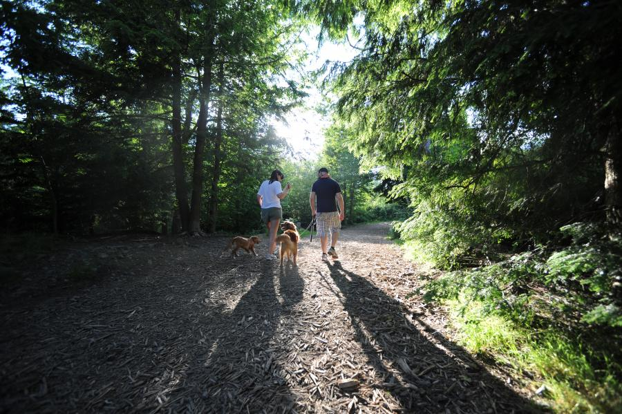 A man and woman walk their two dogs along a trail in Shubie Park