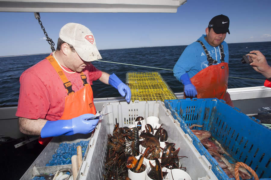 Fishermen sort a catch aboard a lobster boat.