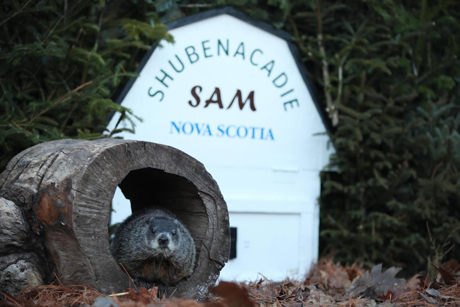 Shubenacadie Sam outside his lair.